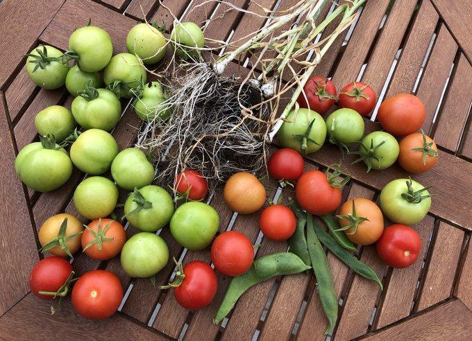 Wow - look at what we have harvested from our school veg patch #healthyschool