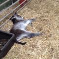 Having a well earned rest.