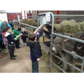 We were allowed to brush the donkeys.
