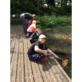 Day 2 Pond Dipping