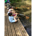 Day 1 Pond dipping!