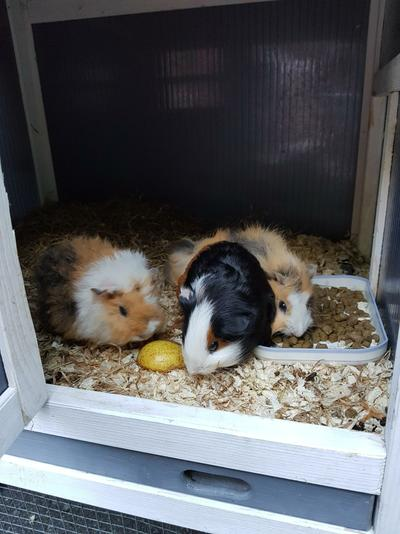 Vinnie (middle), Bubble (left) and Squeak (right)