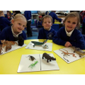 Working together to sort the animals