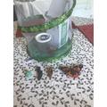 Finley is learning about butterflies.