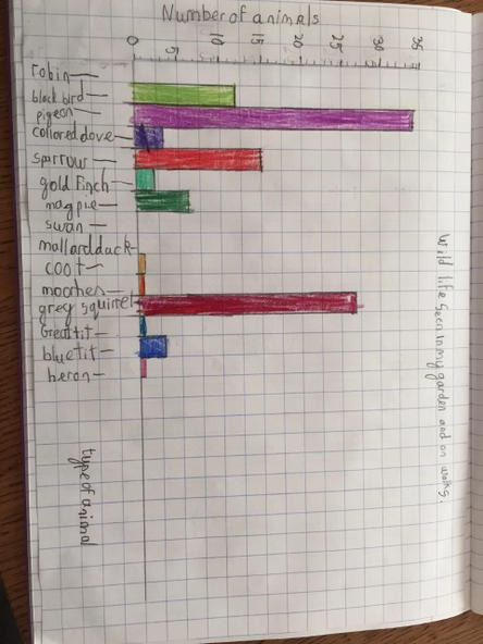 Bar chart of wildlife spotted
