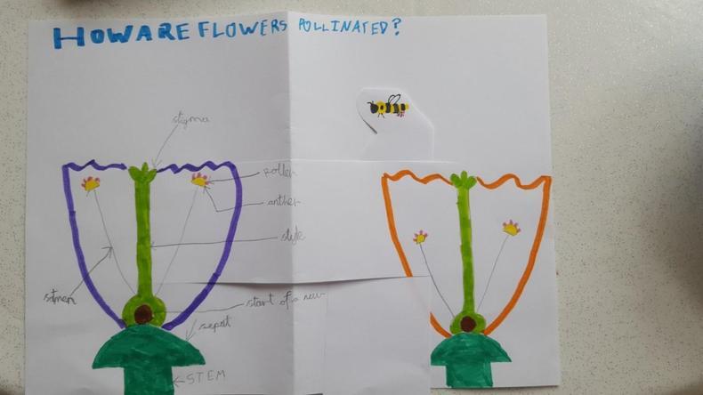 Pollination diagram