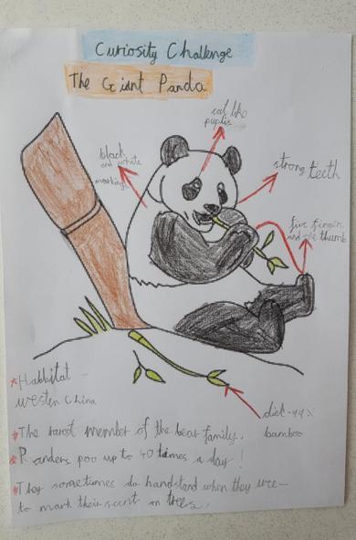 Curiosity challenge: Pandas
