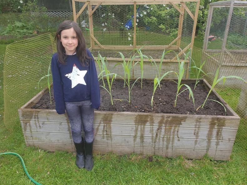 Growing veg
