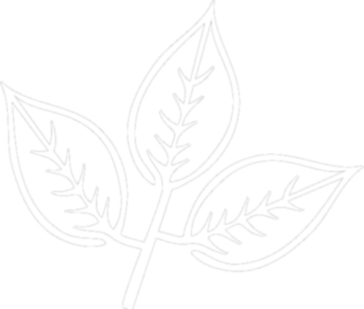 White Ash Field Logo Leaf