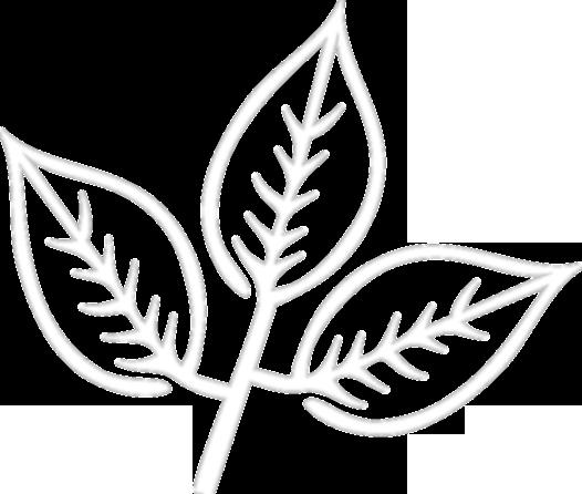 White Ash Field Logo Leaf