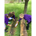 We started our topic pond dipping and bug hunting.