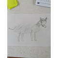 Gemma's been sketching a donkey