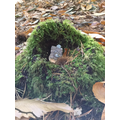 We spotted some fairy houses!