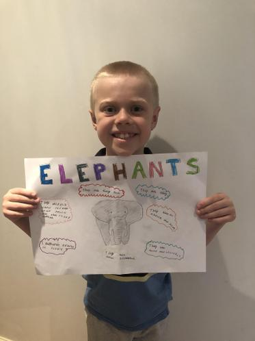 Harry has been researching Elephants and has made a wonderful poster showing his learning.