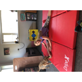 Eloise stretching with her dog