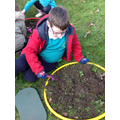 Making sure the soil is not compact.