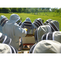 Checking the bees in our protective suits