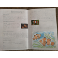 Stanley's non-chronological report on clown fish!