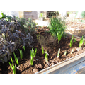Starting to plant our garden up - we look forward to when we start to see some pretty colo
