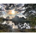 Lyla 6G- Swan lake