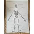 Haniel's fantastic labelling of the human skeleton