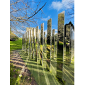 Lyla 6G- Park reflections