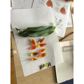 We dissected tulips in science and identified the parts of a flowering plant
