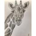 Miss Goodman's giraffe