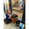 Isabella's Avocado Plants from Lockdown 1