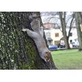 Henry 6S - Spider squirrel