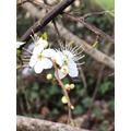Sozy 6G- Flower