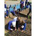 Year 3 Sunflower Planting