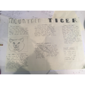 Niamh's mountain tiger report