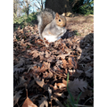 Dorothy 6G- Fluffy trousers the squirrel