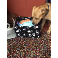Lola made an excellent toybox for Moose, her grandparents' dog.