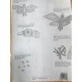 Gaelle's beautifully presented peppered moth art