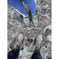 Lyla's very muddy run!