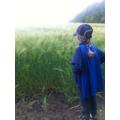 Millie (Oak Class) admiring the wheat field