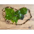 Ivy's heart Maple Class