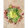 Leaves by Barnaby (Oak Class)