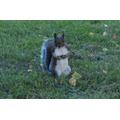 A squeaking squirrel!