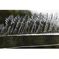 Henry 6S - Frozen ferns