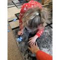 Daisy-May domino addition