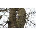 Jean 6S - Squirrel
