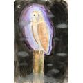 Teddy's owl