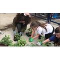 Sorting our seedlings