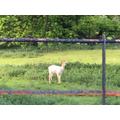 Charlie R 6S Deer