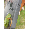 Centipede rescue!