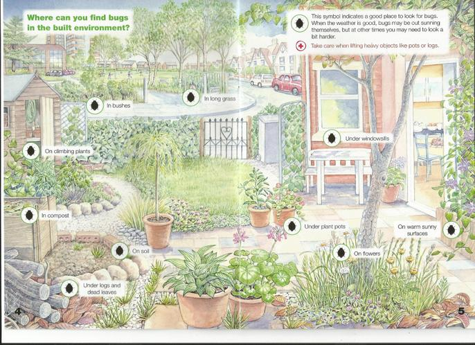 BUG Hunt ideas - have a look around your garden.