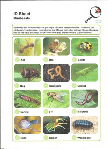 ID Minibeasts sheet